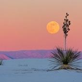 ✨Full Moon 🌙✨💫 ✨ 🅟🅤🅡🅘🅕🅘🅒🅐🅣🅘🅞🅝 #fullmoon #magic #energy #positivevibes #purification #lithotherapie #stone #moon #rituel